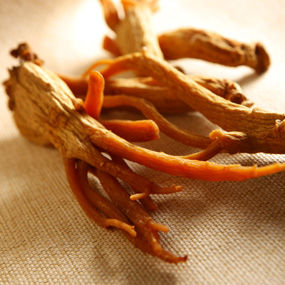 Herbs_to_Help_ED_Panax_Ginseng_4